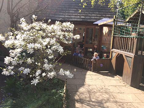 The Magnolia in the garden at Acorns Nursery School Cirencester